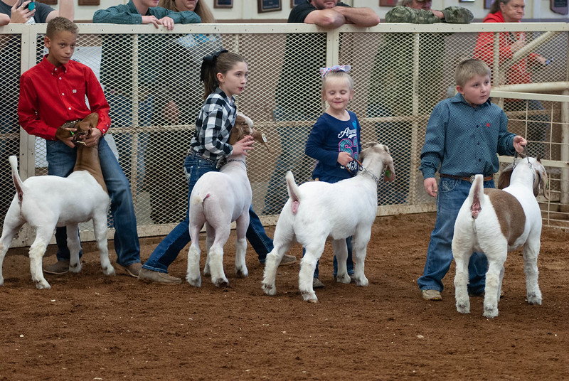 20190105_eosc_goats_showmanship-and-does434