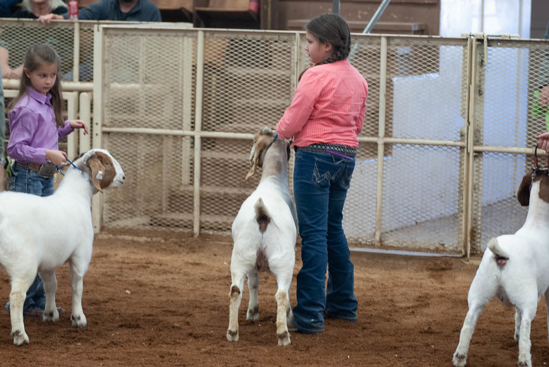 20190105_eosc_goats_showmanship-and-does437