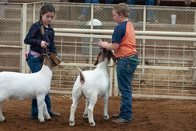 20190105_eosc_goats_showmanship-and-does442