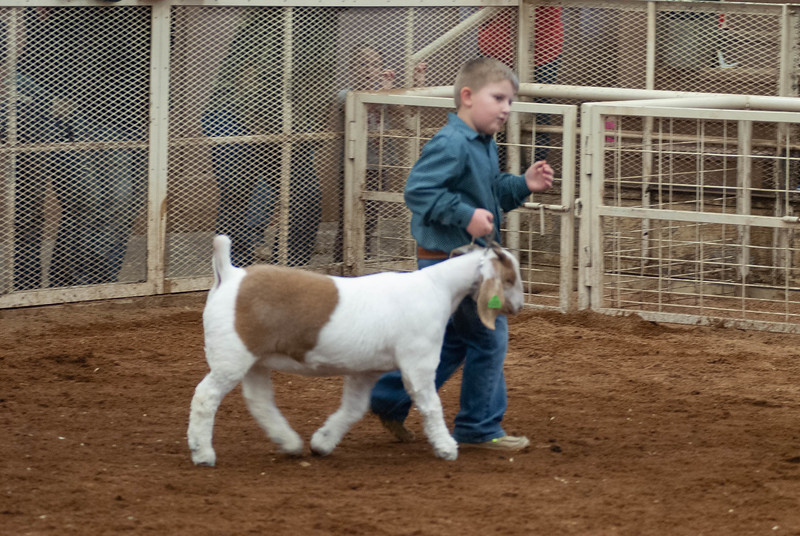 20190105_eosc_goats_showmanship-and-does447