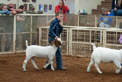 20190105_eosc_goats_showmanship-and-does446