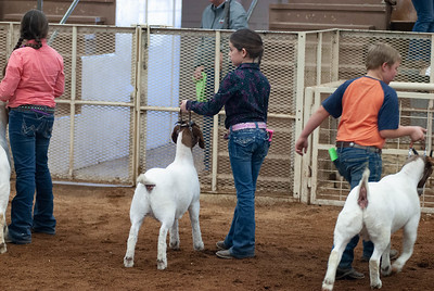 20190105_eosc_goats_showmanship-and-does441