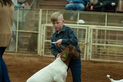 20190105_eosc_goats_wethers605