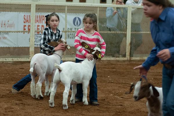 20190105_eosc_goats_wethers624
