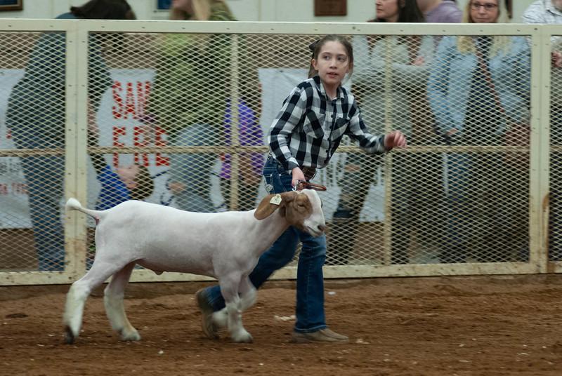 20190105_eosc_goats_wethers615