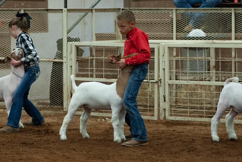 20190105_eosc_goats_wethers617