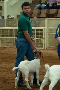 20190105_eosc_goats_wethers607
