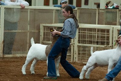 20190105_eosc_goats_wethers627