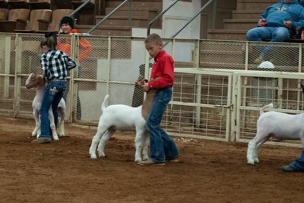 20190105_eosc_goats_wethers621