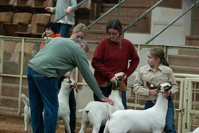 20190105_eosc_goats_wethers626