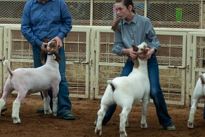 20190105_eosc_goats_wethers609