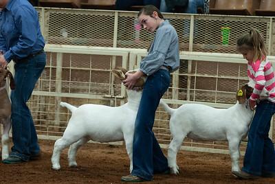 20190105_eosc_goats_wethers619