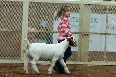 20190105_eosc_goats_wethers611