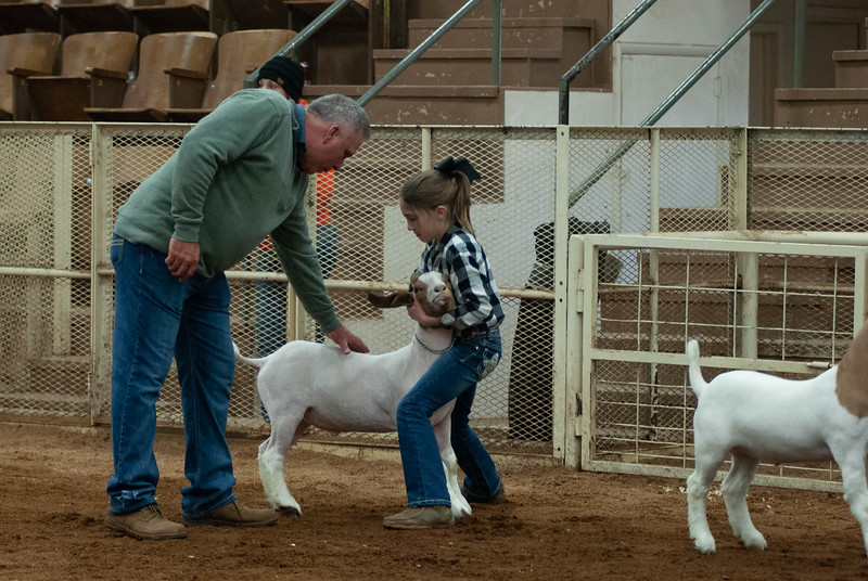 20190105_eosc_goats_wethers616