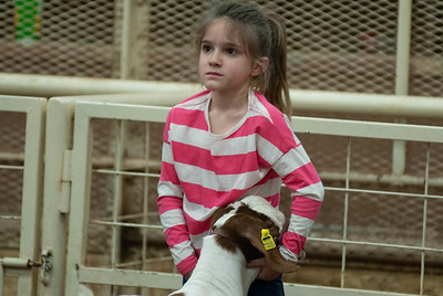 20190105_eosc_goats_wethers610