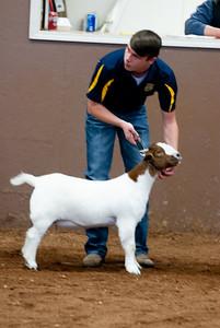 eosc_goats_20200104-27