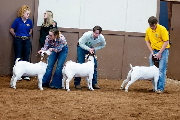 eosc_goats_20200104-29