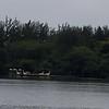 port a potties on floating dock :/
