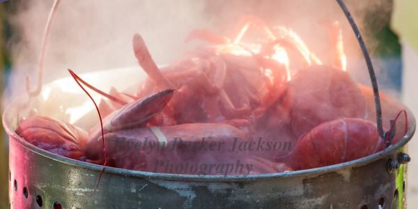 Steamy Lobsters Almost Ready