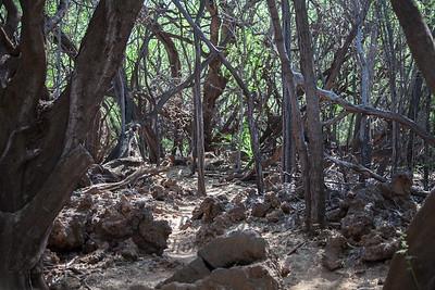 Hawaii Big Island Deadwood Forest