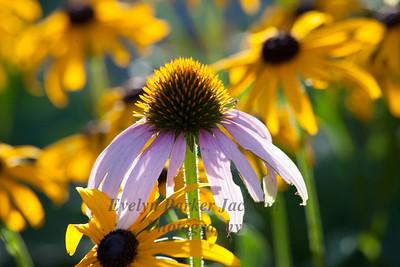 Flowers Part II