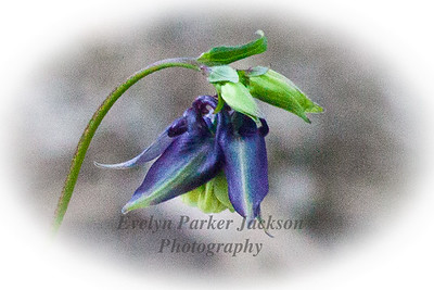20120511_NevyGardens_8745-2PC