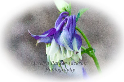 20120511_NevyGardens_8745-5PC