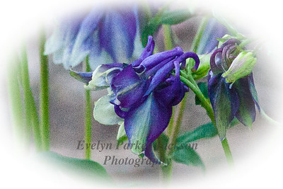 20120511_NevyGardens_8745-4PC