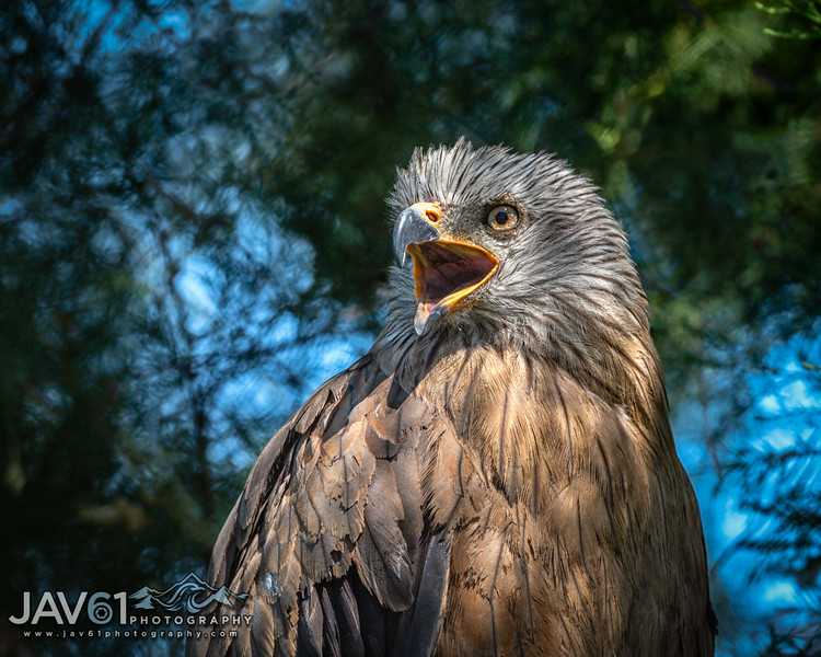 Nature and Wildlife photography