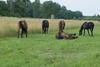 Les Abrons Riding 2014-1070634