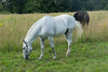Les Abrons Riding 2014-1070629