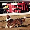 Gala Dogs 794