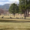 Deer relaxing on Greensward next to Duplex