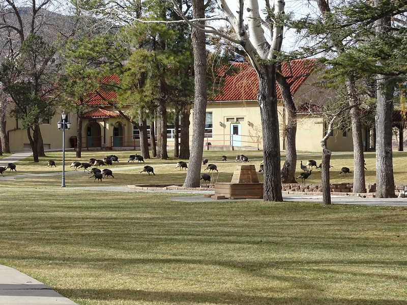 The Greensward at Philmont Training Center (Campus area)