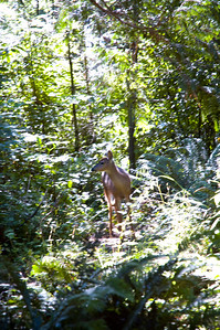Debra spotted a deer lounging in a sunny spot in the middle of the campsites.