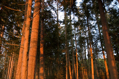 Trees in the campground during sunset.
