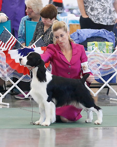 (Novice dog 1st) FAIRHAVEN PAWMARC TRUE TO MYSELF