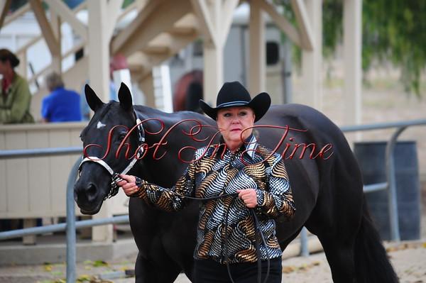 Halter and Horsemanship