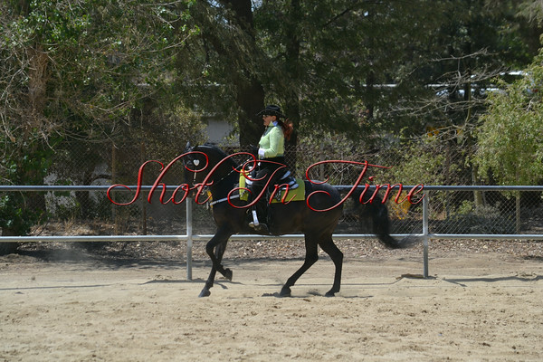 Afternoon Classes - Walk/Trot and Western