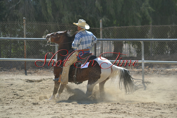 Afternoon - Reining
