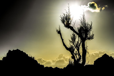 Lone Tree Standing in the sun
