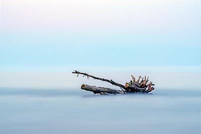 Stranded tree in the Adriatic Sea
