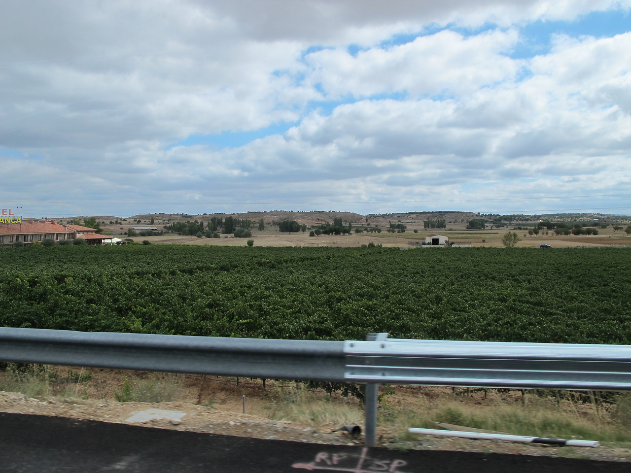 Once you're about 60-90 minutes out of Madrid, you start to see vineyards along the roadways.