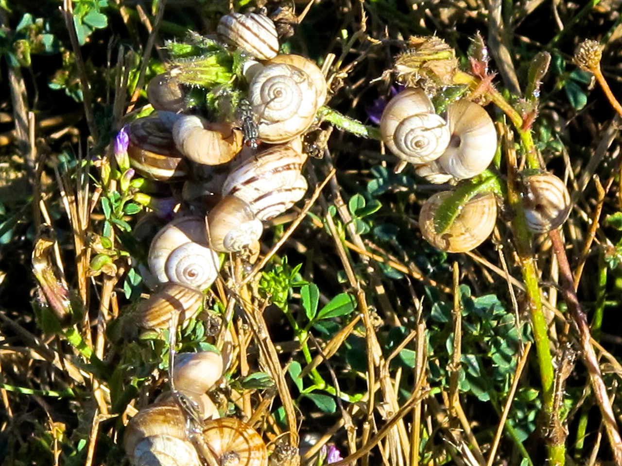 There are lots of snails and slugs in the area.