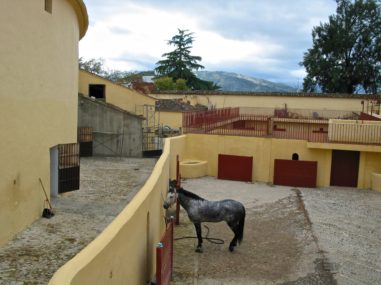 This horse guards the bull pens where bulls are kept prior to entering the ring.