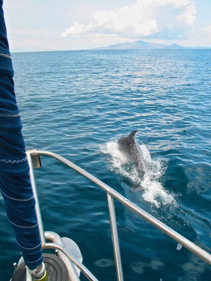 Dolphins inhabit the waters throughout the Saronic Gulf.  If you're lucky, they'll come up very close to your boat.