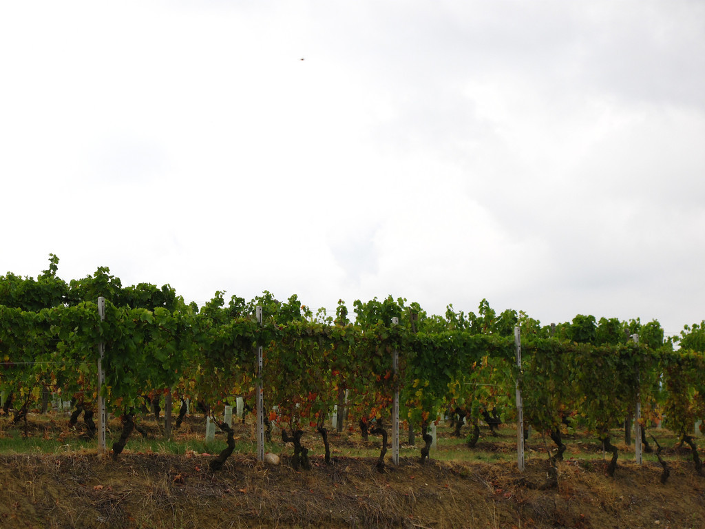 As we leave, we take a look at the vineyards of LaSpinetta.