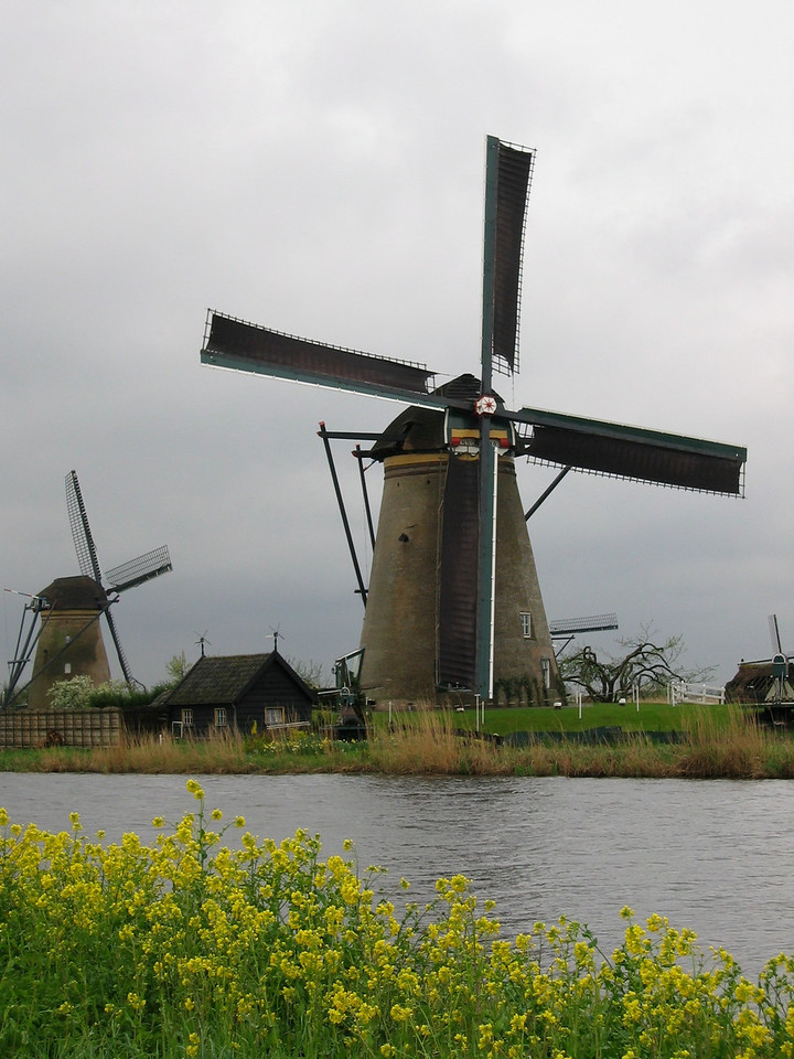 About 15km east of Rotterdam is Kinderdijk.  Kinderdijk is a UNESCO World Heritage Site.  The windmill area is easily reached by taking a bus to Kinderdijk and a short walk outside of town.