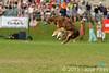 EUC2011, Maribor Slovenia.<br /> Frisbee Dog.<br /> PhotoID : 2011-08-06-0151