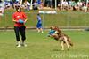 EUC2011, Maribor Slovenia.<br /> Frisbee Dog.<br /> PhotoID : 2011-08-06-0130